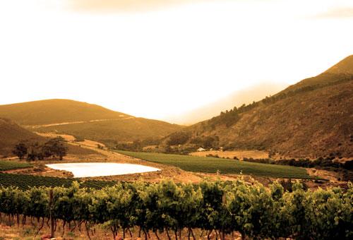 things-to-do-wine-tours-dam.jpg