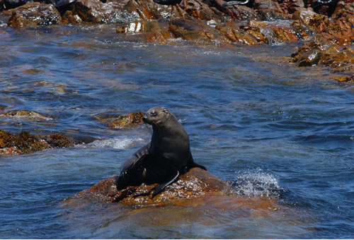 things-to-do-day-trips-cape-fur-seal.jpg