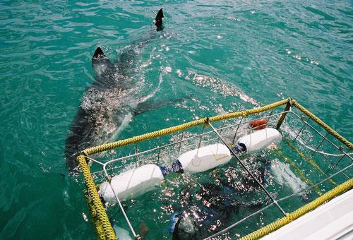things-to-do-shark-watching-shark-cage.jpg