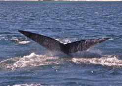 destination-top-attractions-whales.jpg
