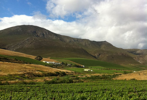 things-to-do-wine-tours-farms.jpg